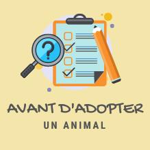 ICON-avant-adoption